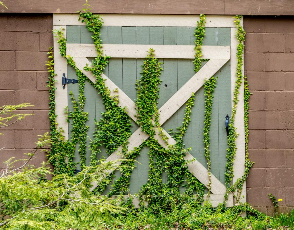 Barn Door with Vines