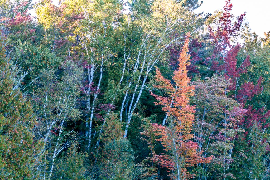 Another spot of color along the west shore