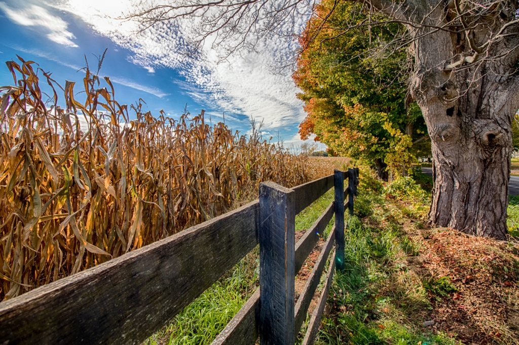 Wooden Fence and Corn Field