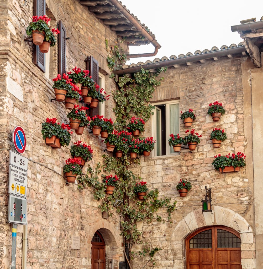 Potted Flowers on Walls