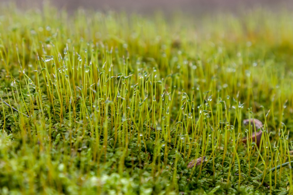 Sprouts Growing in the Moss