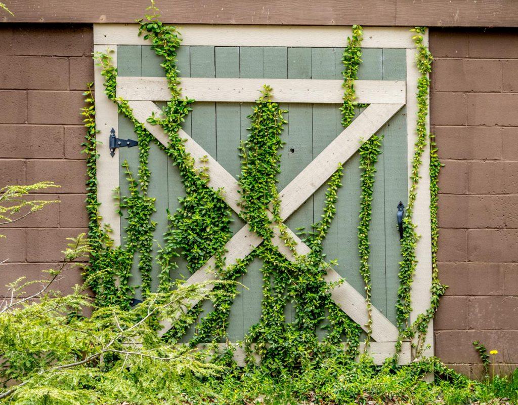 Barn Door with Vines
