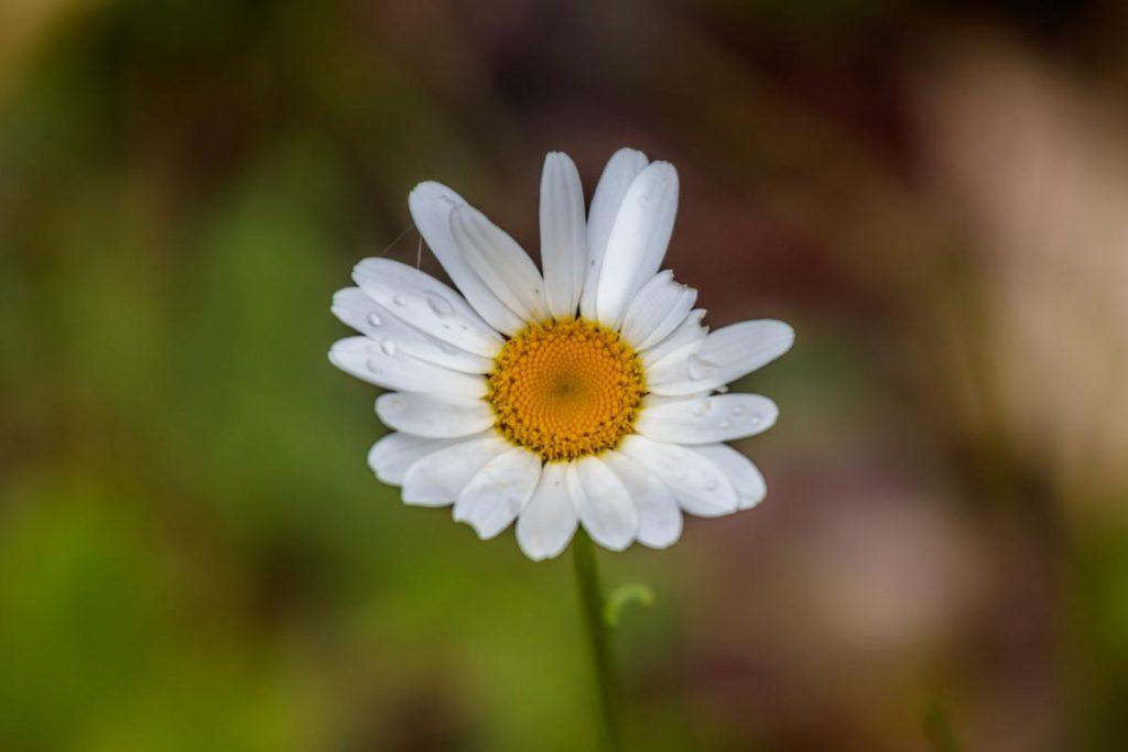Shore Flower
