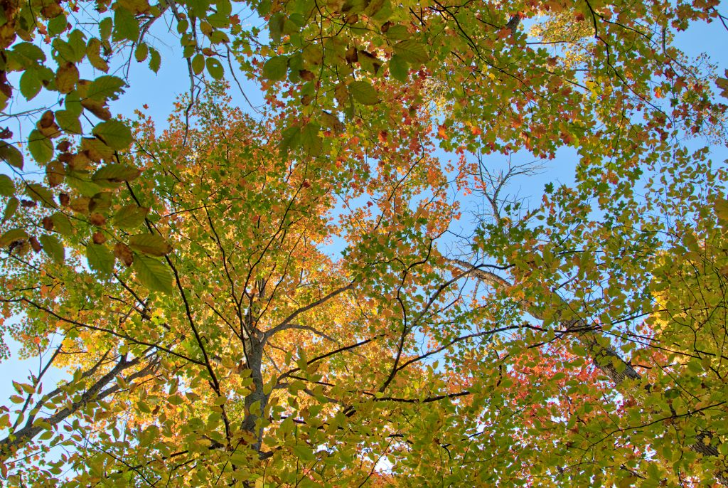 Fall Colors with Blue Sky