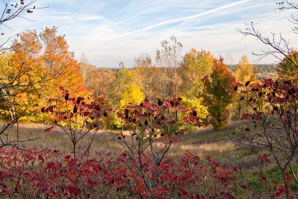 Sumac and Colorful Vista