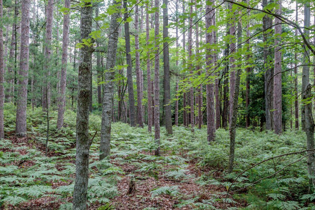 Mixed Woods Along Boekeloo Rd