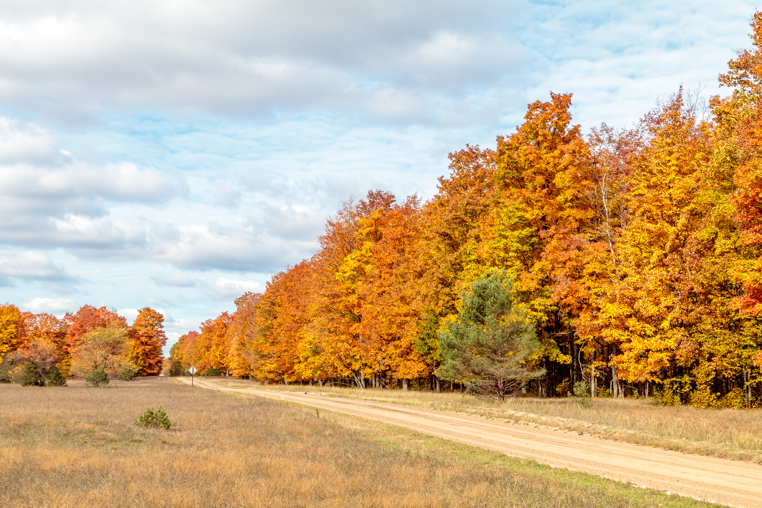Fall Color along a Dirt Road