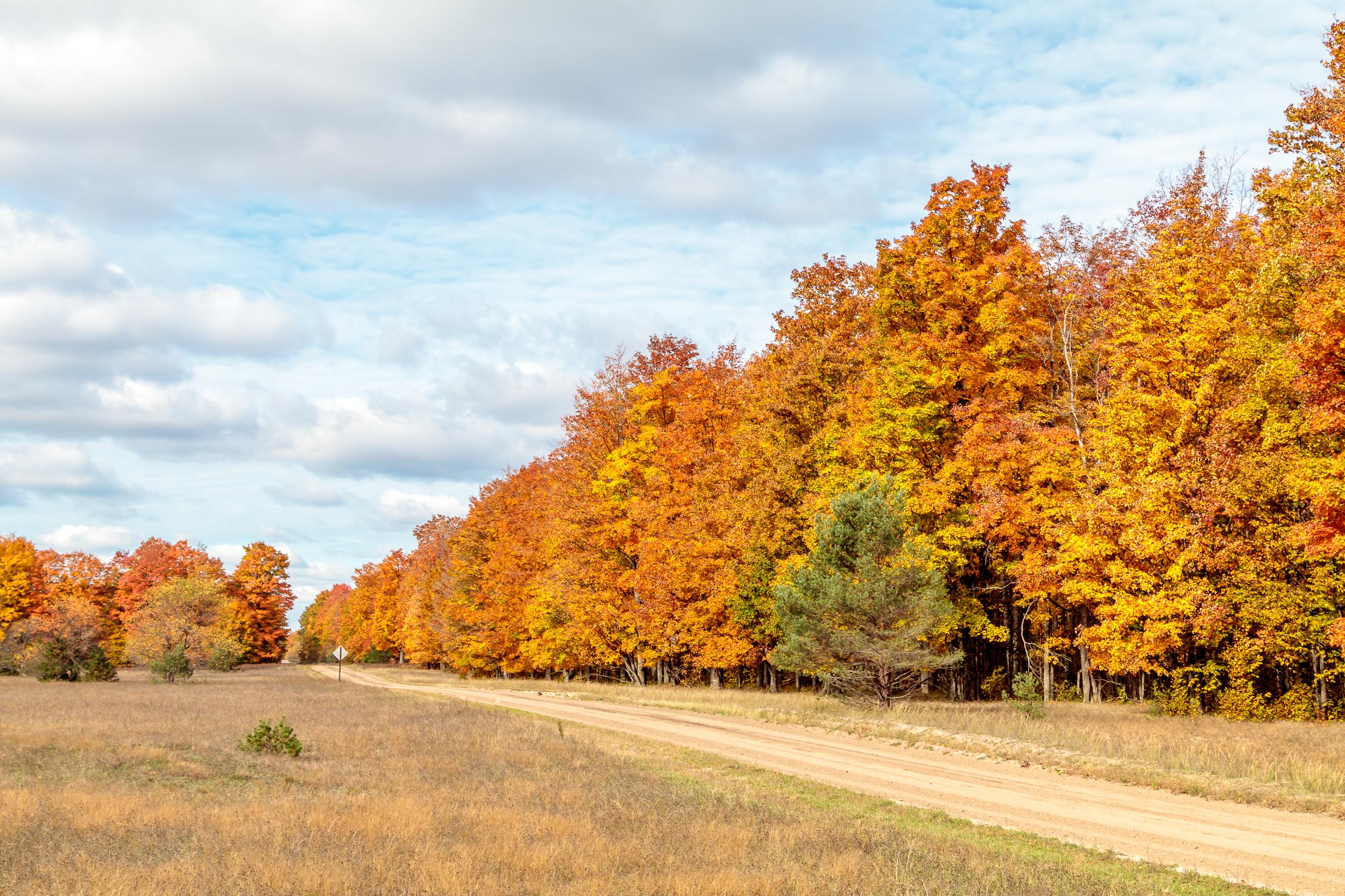 Fall Color along a Dirt Road