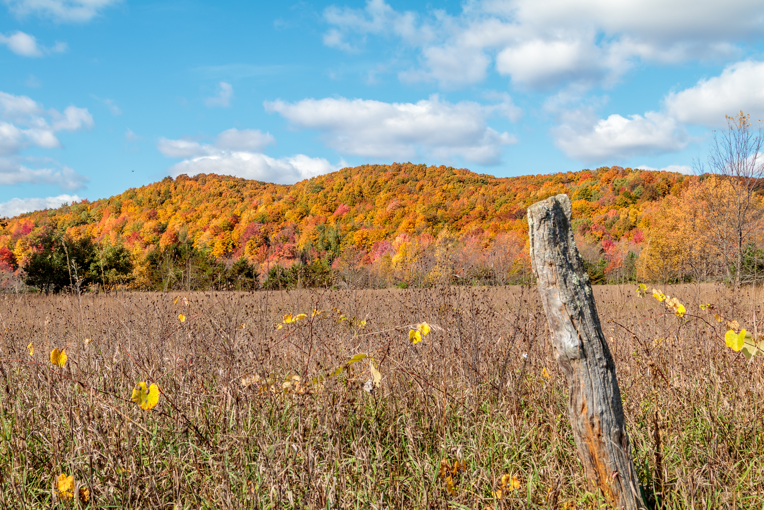 Fence Post and Fall Hillside
