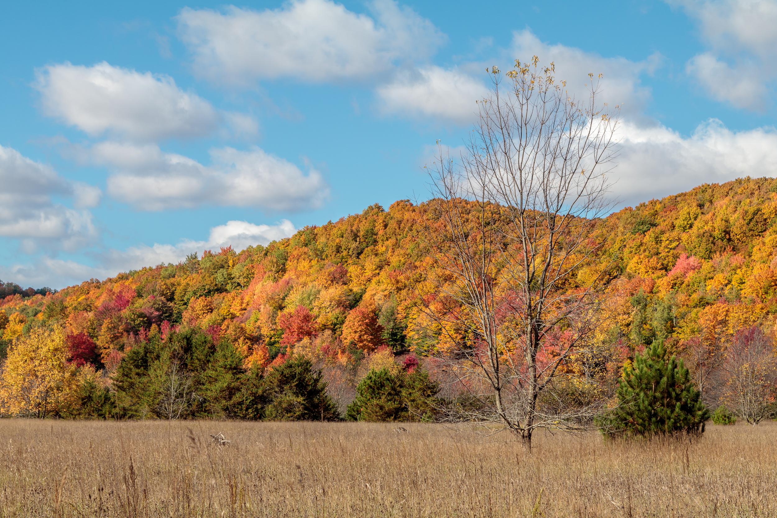Tree and Fall Hillside