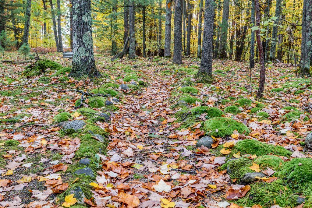 Moss Along a Path