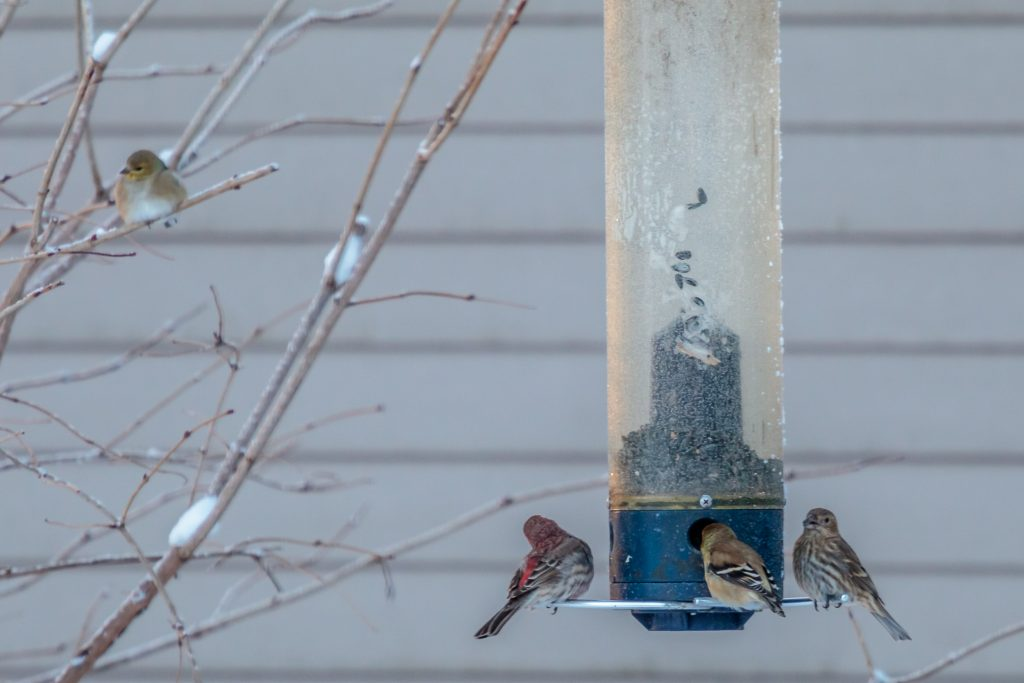 Meeting at the Bird Feeder