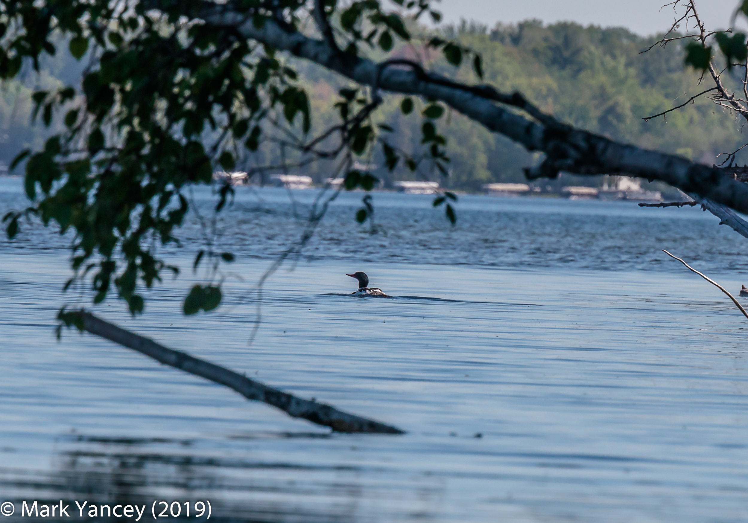 2nd Loon