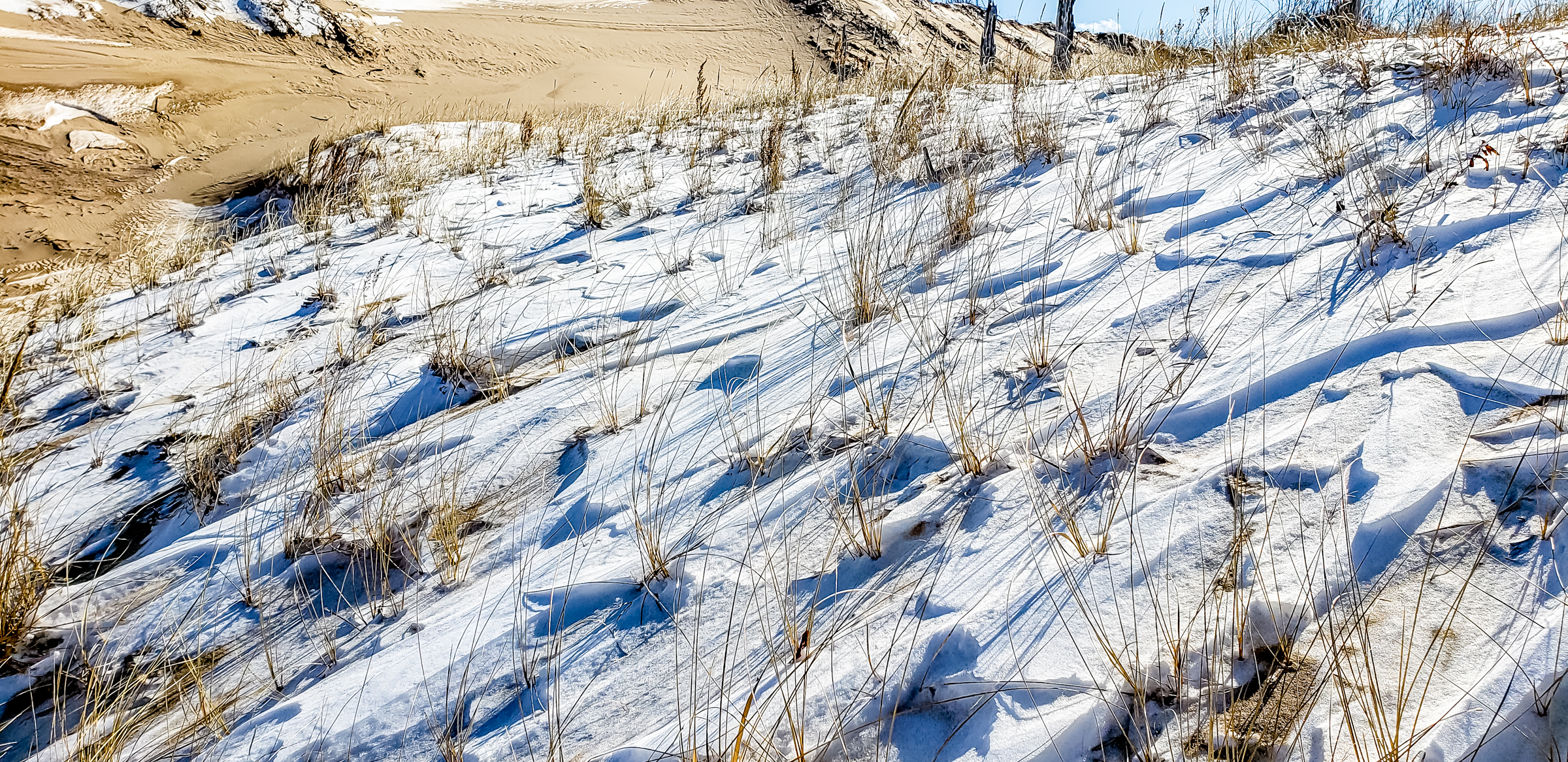 Snow in the Dune Grass